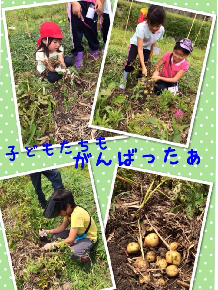 子ども達が自然農の手伝いをがんばる写真